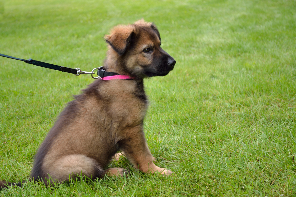 A puppy on a leash outdoors in a park.