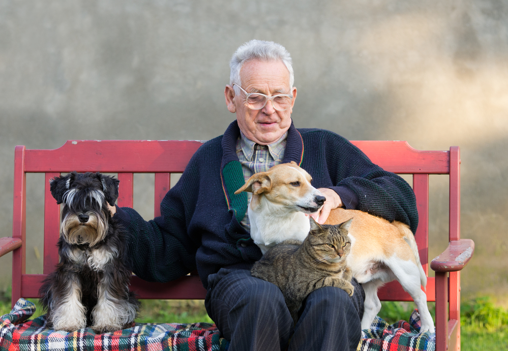 A senior citizen sitting on a bench enjoying his time with his two dogs and a cat.