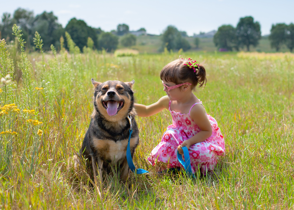 A little girl in a pink sundress wearing glasses is petting a happy multi-colored mixed breed medium-sized dog in a field