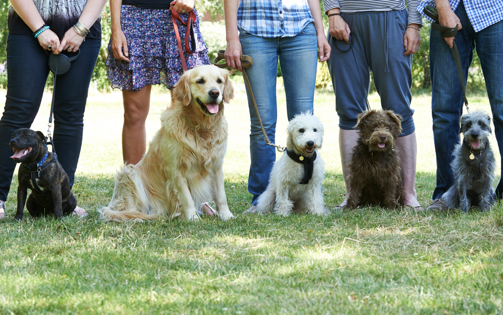 A group of people stand behind their sitting dogs of varied breed backgrounds