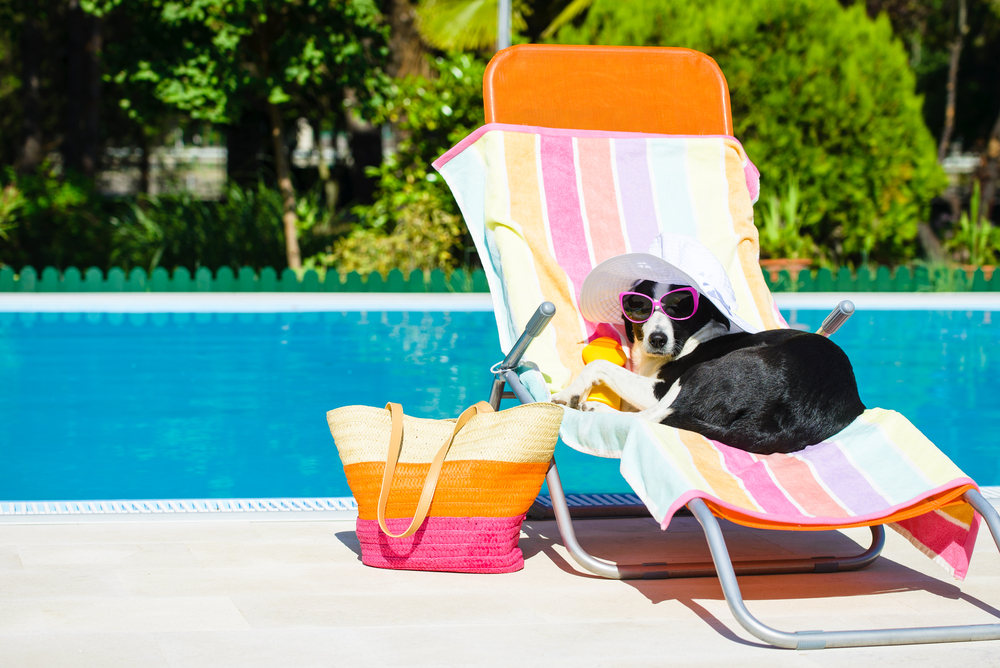 A dog is lounging in a hat and sunglasses by the pool