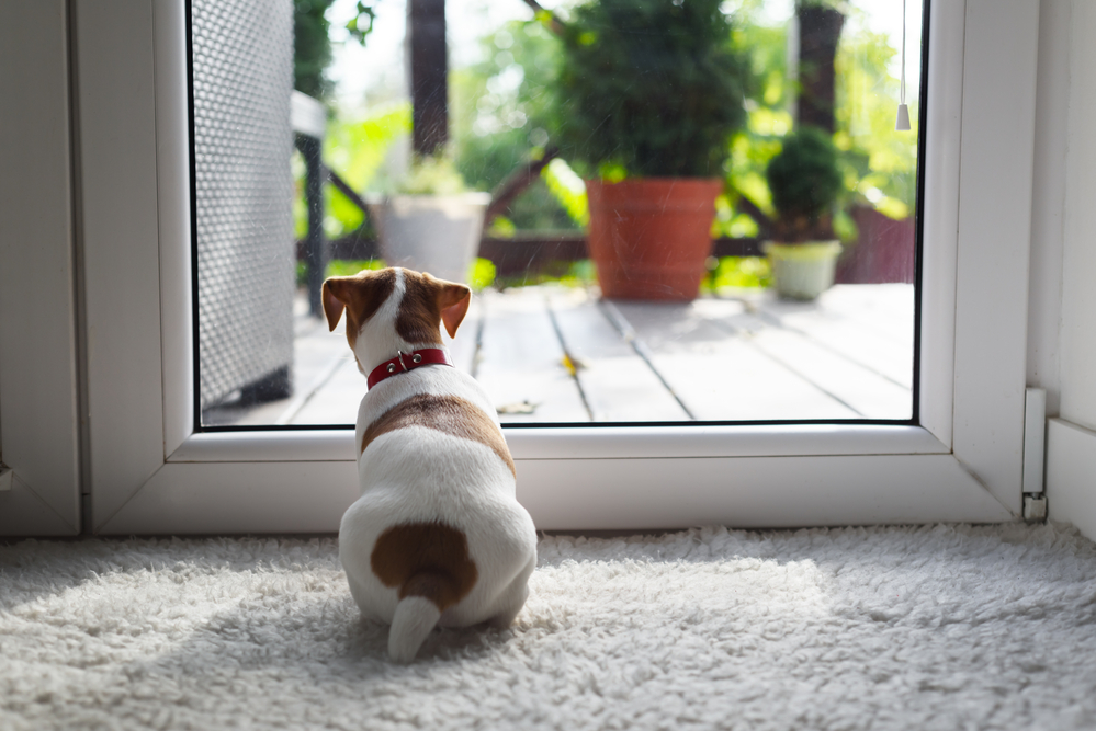 A small dog is waiting in front of a storm door