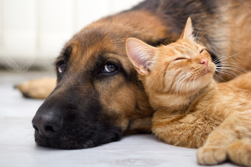 A cat and dog snuggling