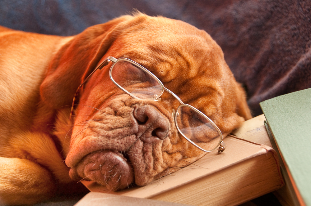 A dog is sleeping on some old closed books and wearing reading glasses.
