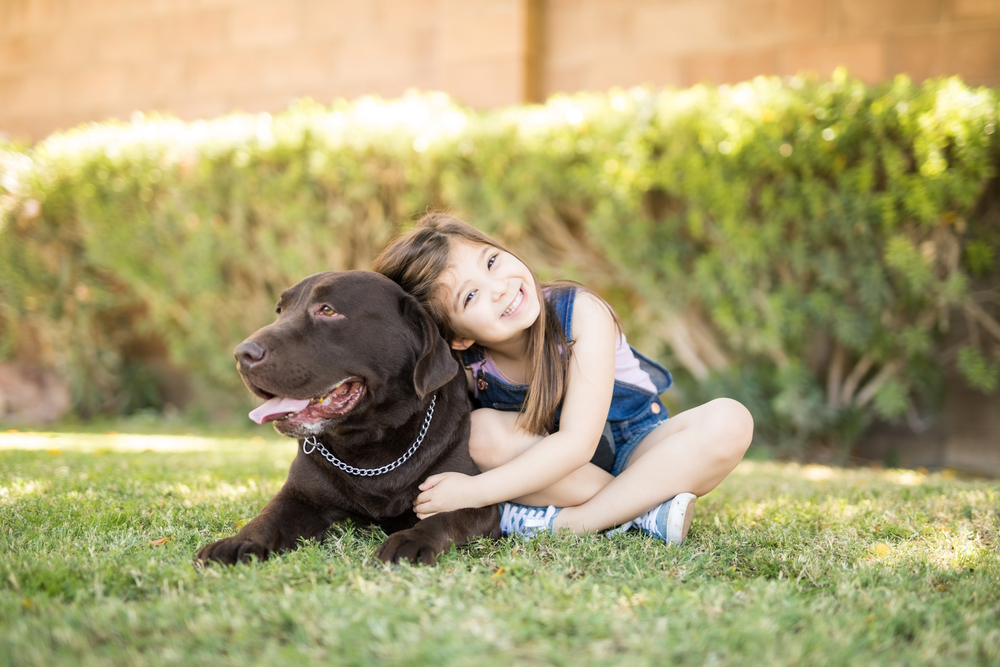A little girl with a chocolate Labrador retriever in the grass