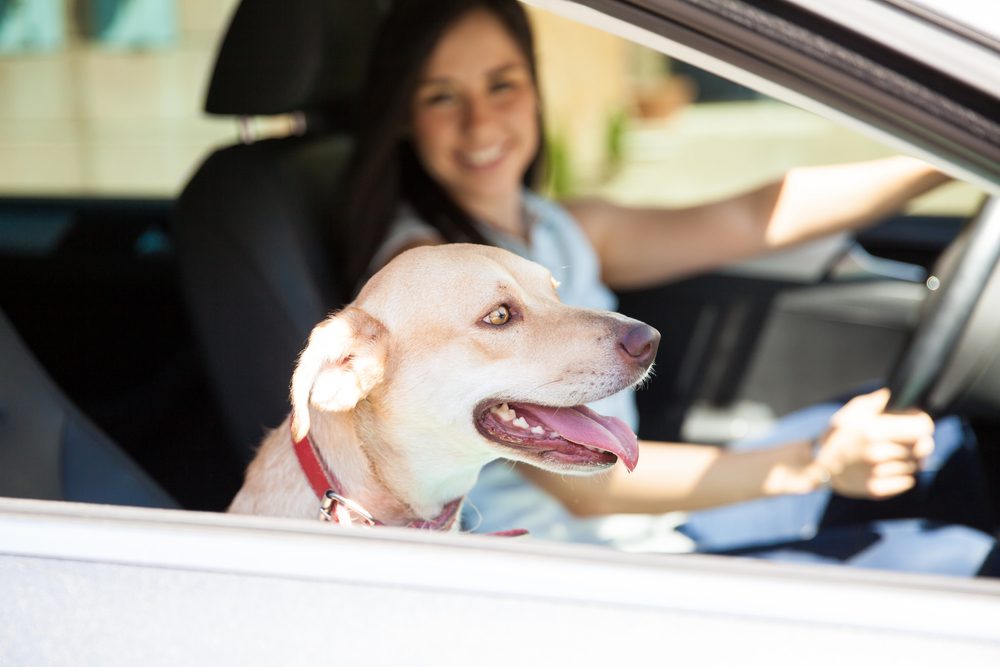 A woman driving her car with a dog in the passenger seat
