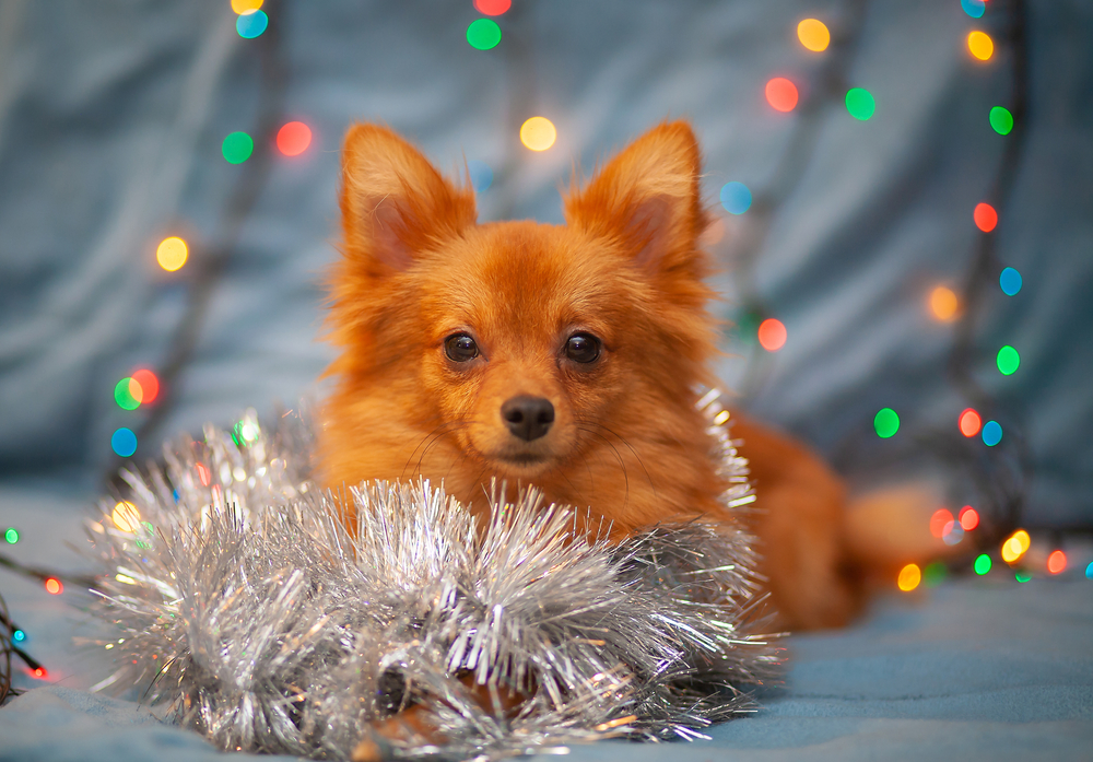A dog with New Year's glitter and other party decorations