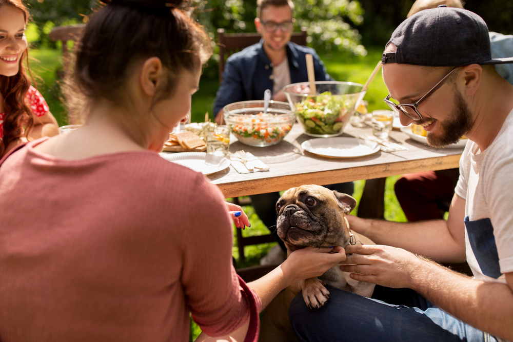 Family with dog at a picnic
