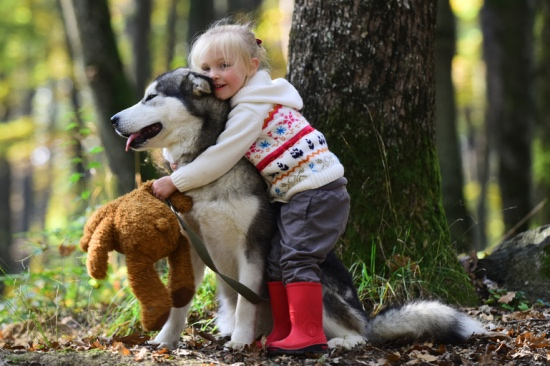 A toddler girl hugging a Siberian Husky in the woods